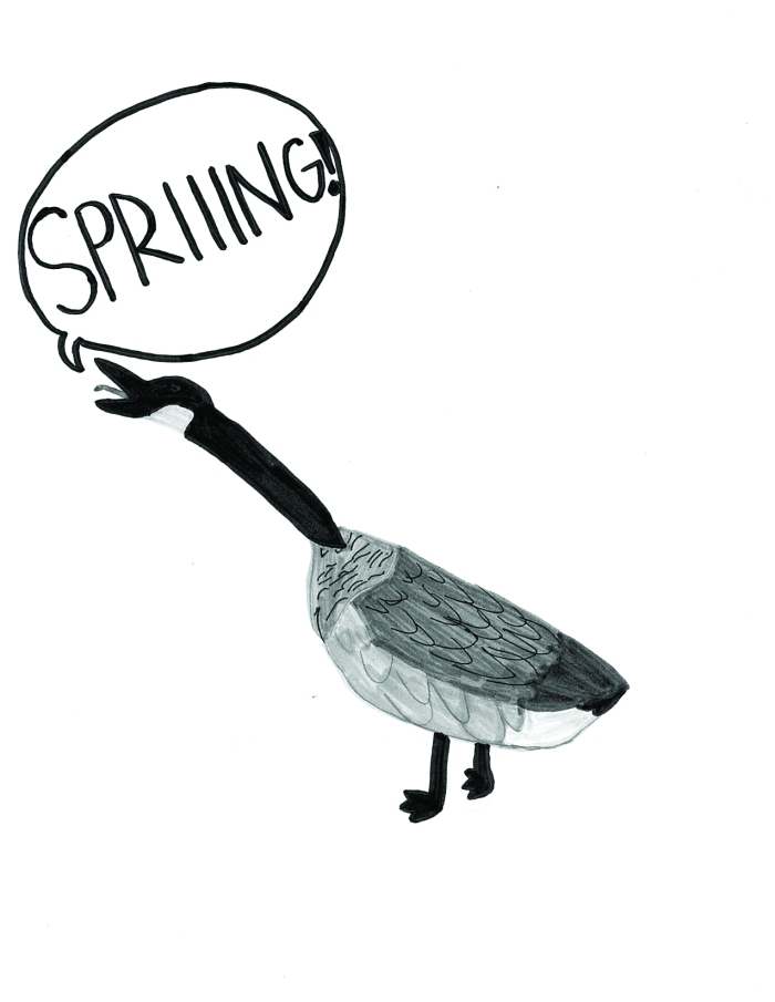 "comic of a goose shouting ""spring"""