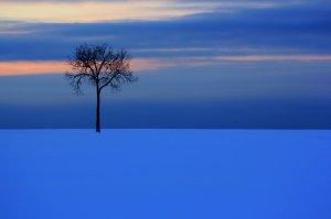 A lone tree in a wide field