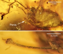 The spider in all its glory, fossilized in amber