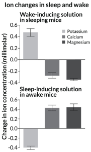 Bar charts of ion changes in sleep and wake