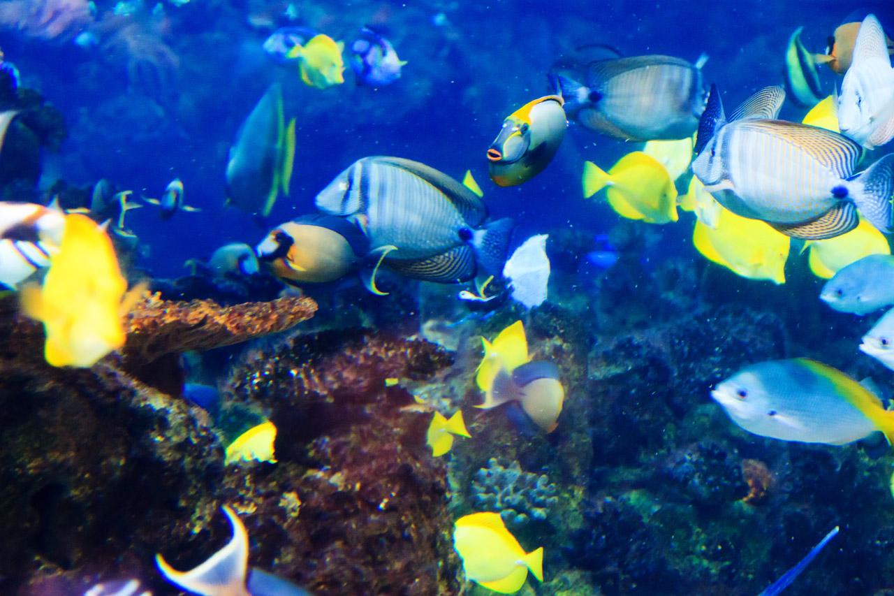 tropical fish underwater
