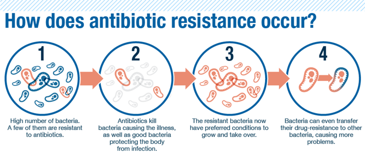 scientists discovered bacterias begin to form antibiotic resistance Scientists discovered bacterias begin to form antibiotic resistance  antibiotic resistance, bacterial infections, scientist discovered  antibiotic resistance.