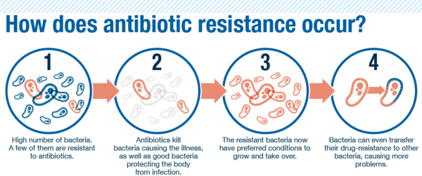 bacteria-info-color